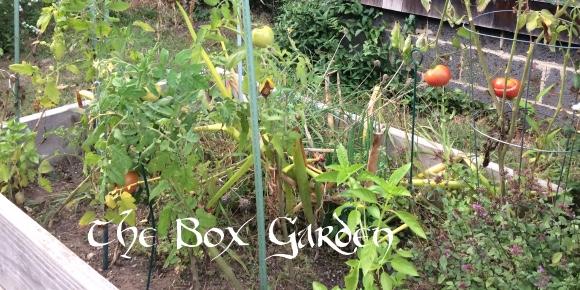 TheBoxGarden(featured)