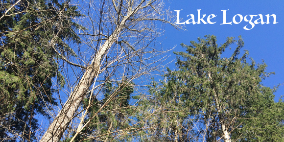 lakelogan(featured)
